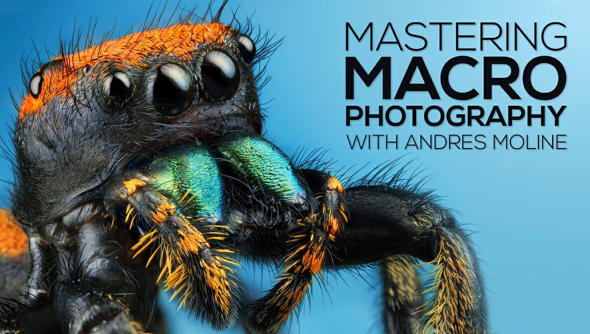 Andres Moline - Mastering Macro Photography
